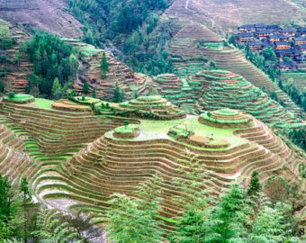 Rice Terrace clipart japanese rice In China Rice terraces Etsy