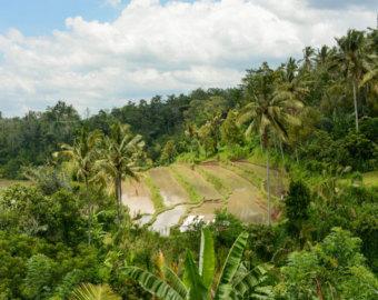 Rice Terrace clipart Travel Terrace Print Bali Etsy