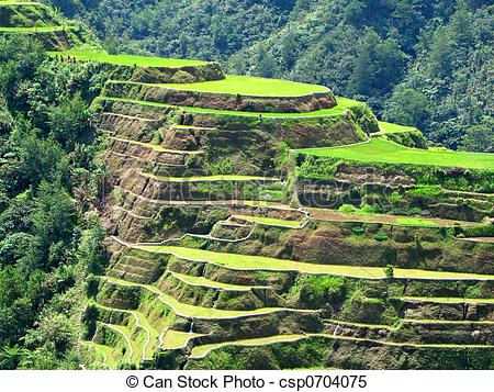 Rice Terrace clipart japanese rice  of Banaue Stock Images