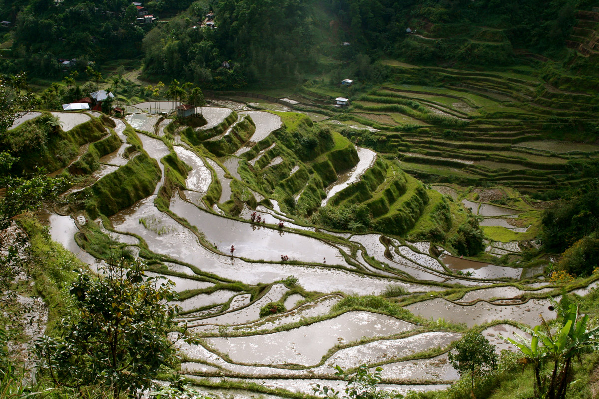 Rice Terrace clipart rice field Terraces Facts Ifugao Banaue