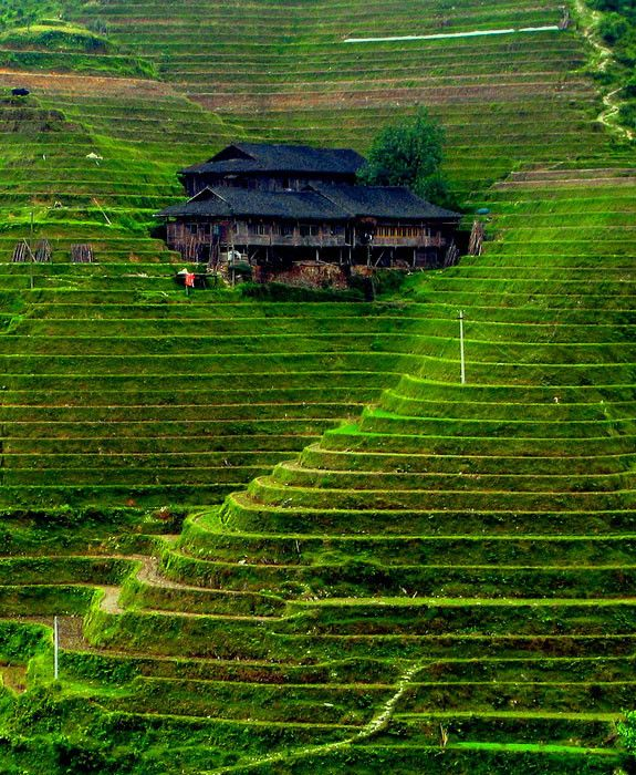 Rice Terrace clipart rice field Rice images on about Banaue