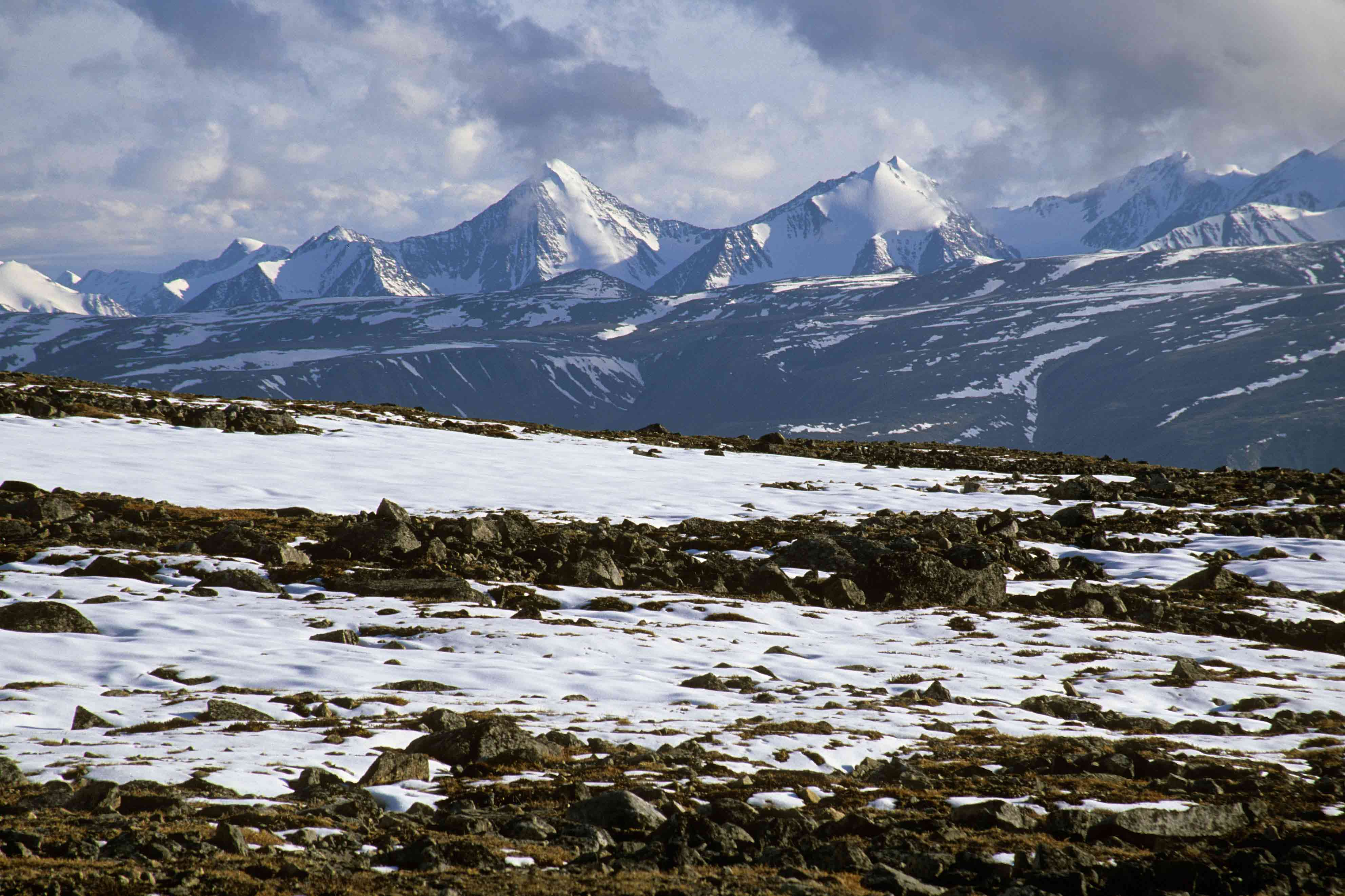 Sream clipart arctic tundra A Pinterest Pin this image