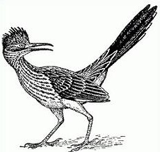Bird clipart woodpecker Free Roadrunner Clipart Roadrunner