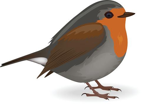 Robin clipart Robin Free Clipart Bird Collection