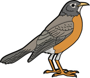 Robin clipart American Size:  Search From: