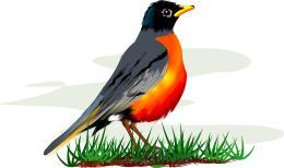 Robin clipart Robin Free Free robin Clip