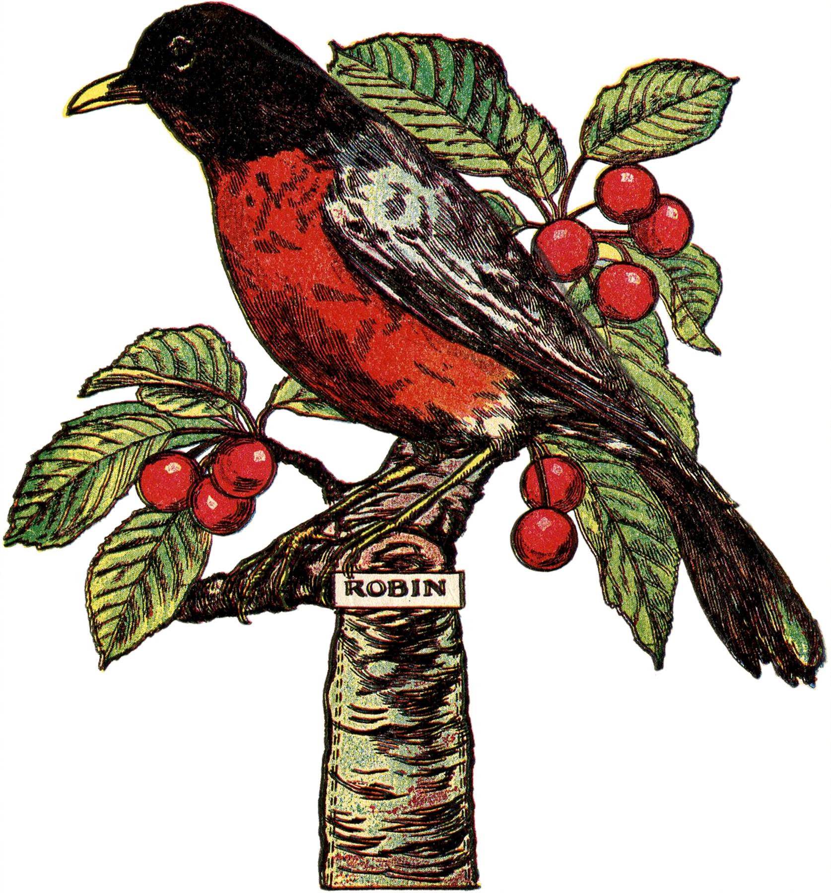 Sea Bird clipart robin #6