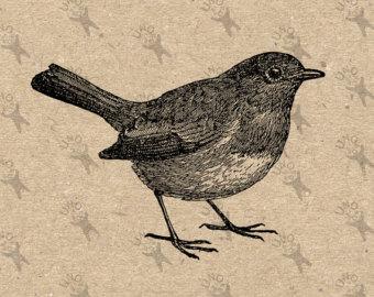 Wren clipart robin bird Transfer image Design Digital File
