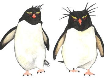 Rockhopper Penguin clipart Print 5x7 penguin Etsy Watercolor