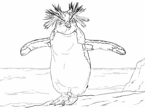Rockhopper Penguin clipart Version Penguin see page Northern