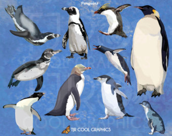 Rockhopper Penguin clipart emperor penguin #11
