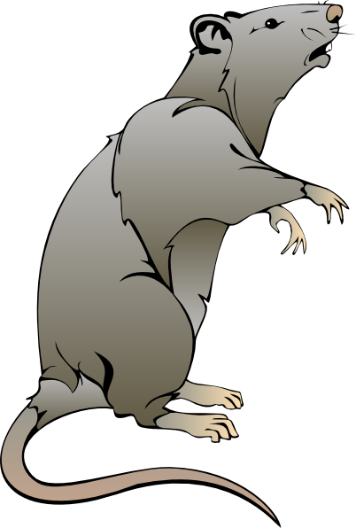 Rodent clipart Download online image vector this
