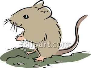 Rodent clipart Rodent Clip Mouse Download Art