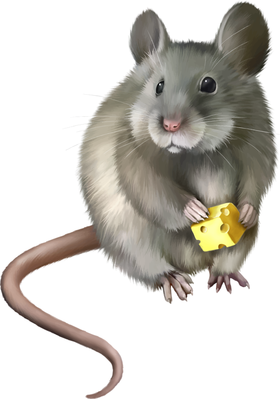 Rat clipart mouse animal #4