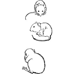 Rodent clipart small mouse #3