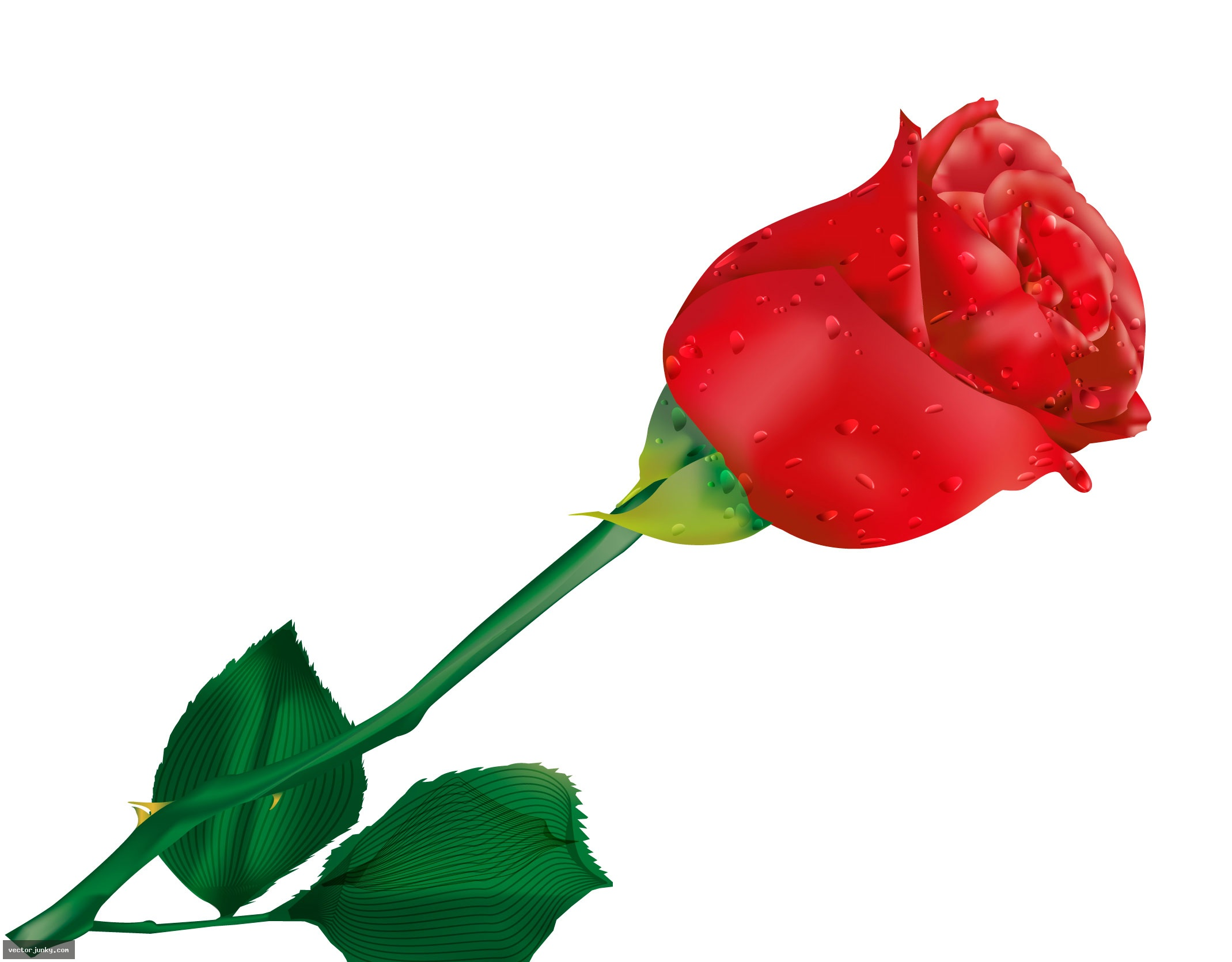 Red Rose clipart bright red #2