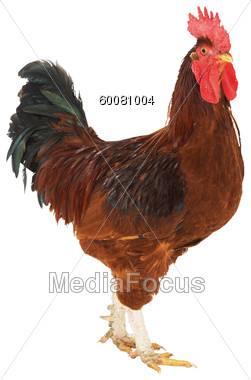 Rooster clipart brown #2