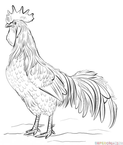 Drawn rooster easy A to  tutorials for