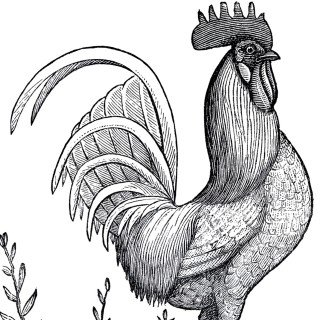 Rooster clipart vintage #6
