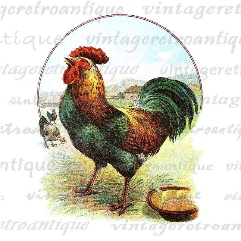 Rooster clipart vintage #4