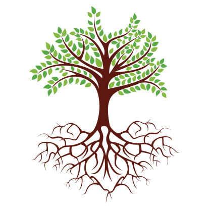 Roots clipart #12