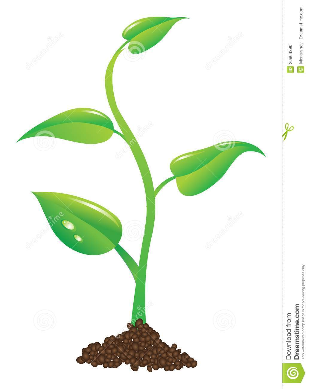 Roots clipart baby seedling Plant Search clipart Google plant
