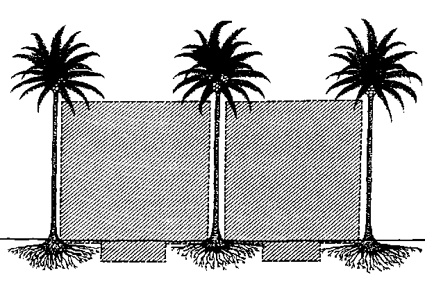 Roots clipart coconut Coconuts with 1988) intercropping area