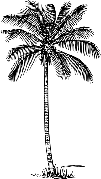 Roots clipart coconut Art online vector Coconut Palm