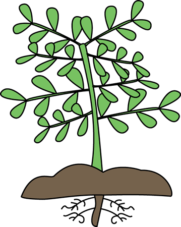 Roots clipart cute plant With Science Roots Images Plant