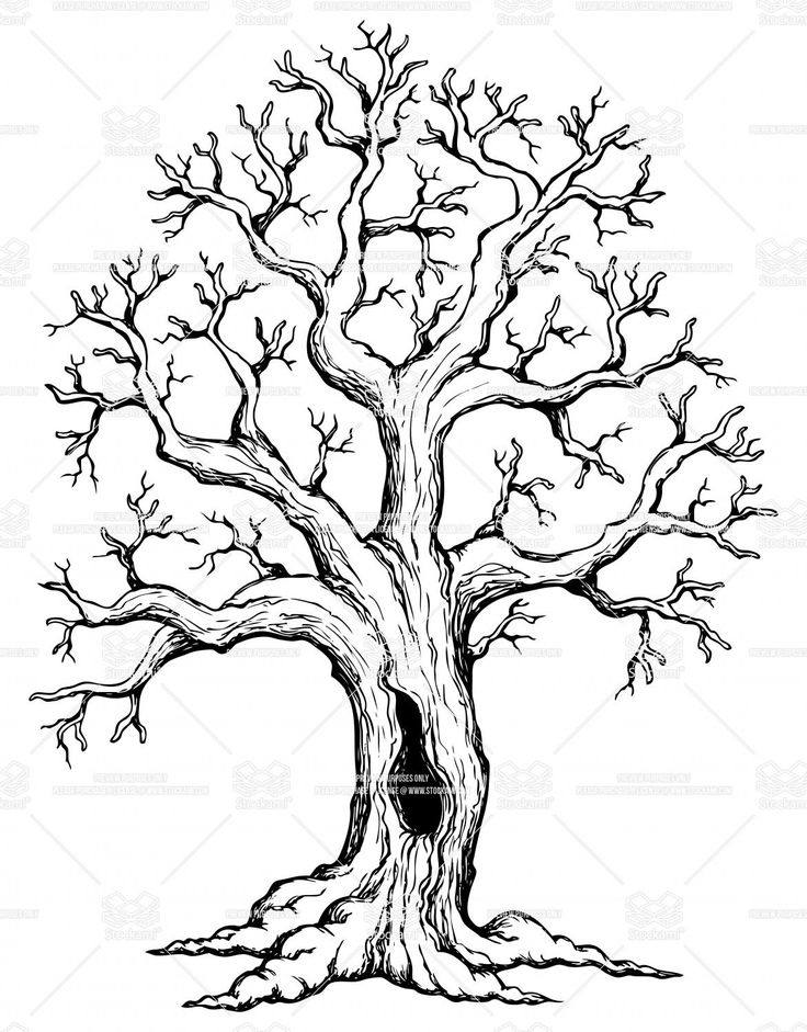 Roots clipart cute plant Tree with Drawings 1 Oak