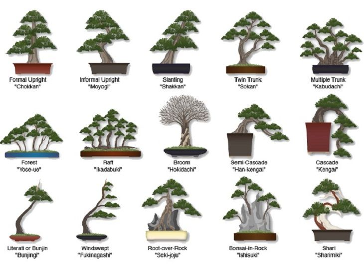 Plant clipart different kind plant Bonsai :Various trees on Best