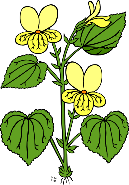 Wildflower clipart small plant Cliparting roots clipart with clipart