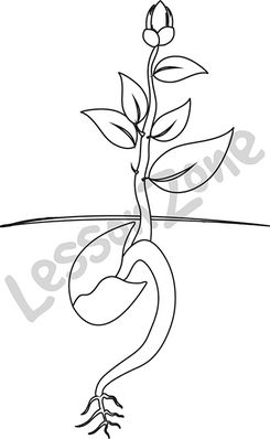 Roots clipart flower bud Lesson with flower leaves Art