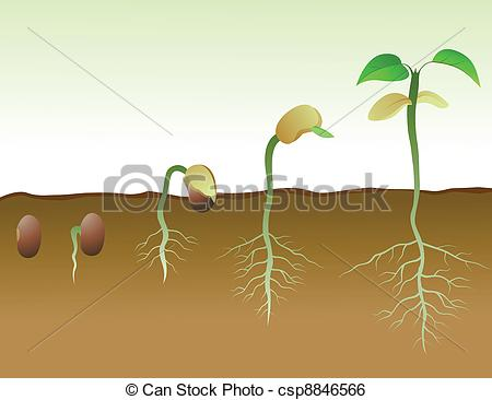 Seeds clipart seed germination Of Of Seed Vector Squence