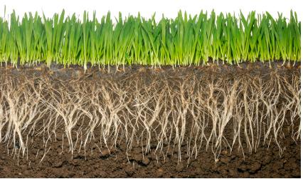 Roots clipart grass #7