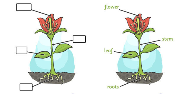 Science clipart flower For diagram flowers about plant
