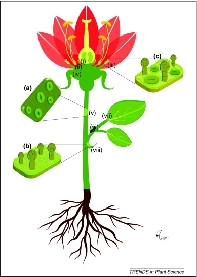 Science clipart flower Plant Flower Images Clipart flower%20plant%20with%20roots