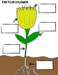 Plant clipart part {Set 4} Science Posters of