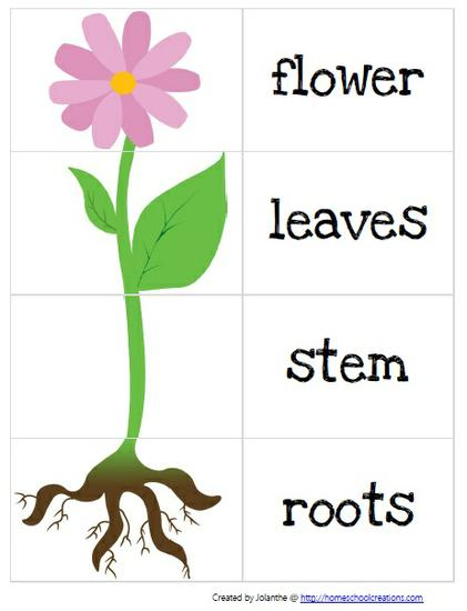 Plant clipart part Students be a seed Creations