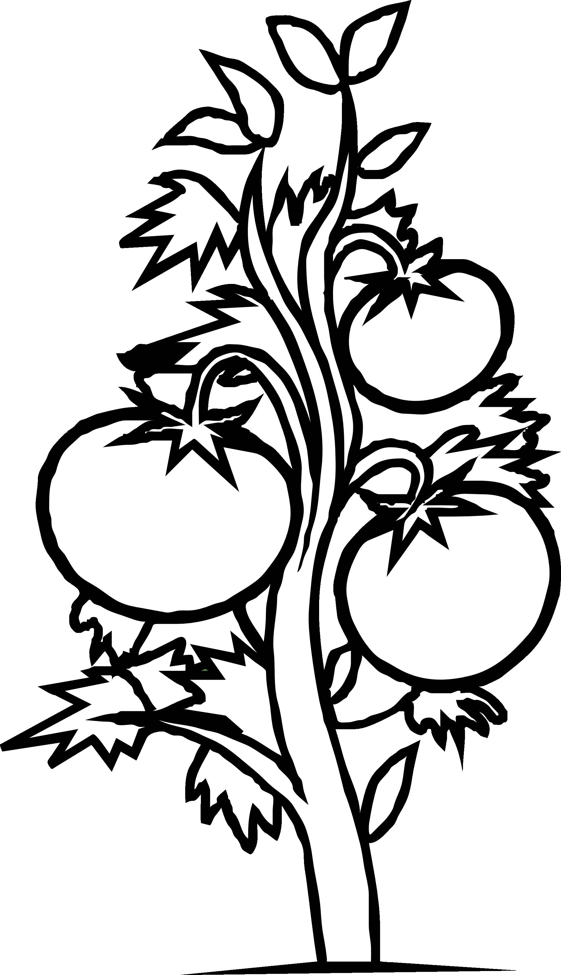 Cherry Tomato clipart tree cartoon Clipart Black White  Black