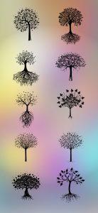 Roots clipart transparent Your Tree Create PicsArt Photo