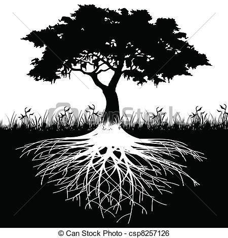 Roots clipart transparent 23 Tree art about clip