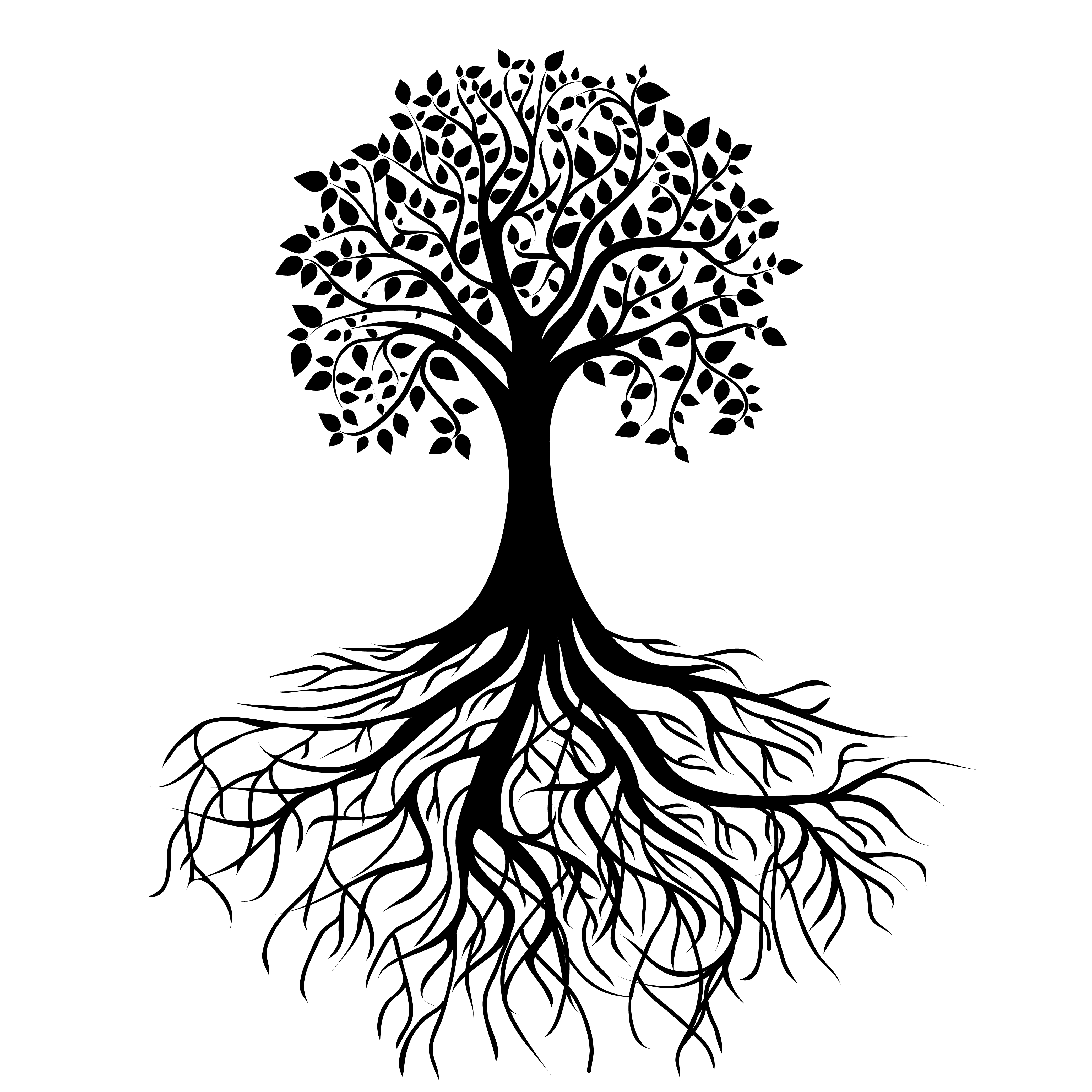 Drawn roots Tree The writing Roots Png