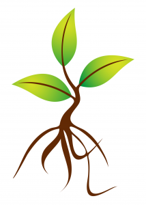 Roots clipart tree sprout Tree Sprout Download Sprout Clipart