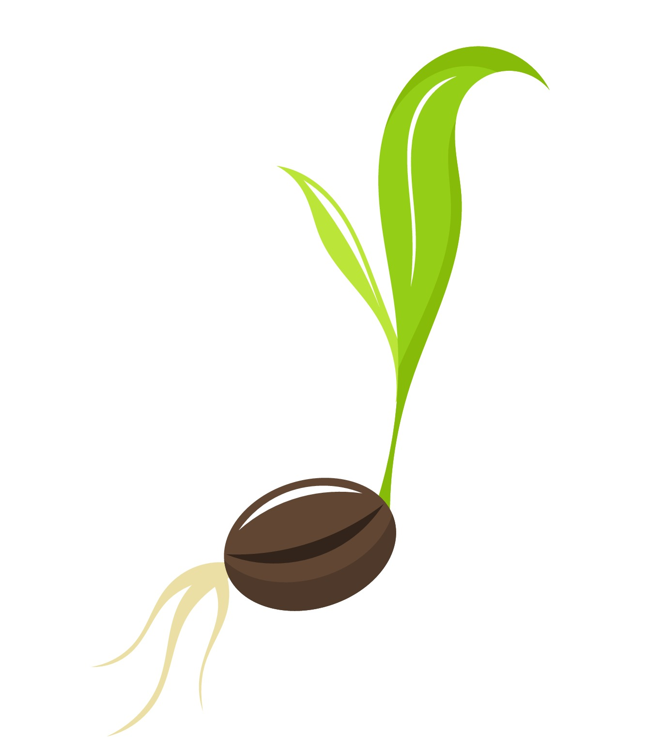 Seed clipart plant seed All emaze plants about