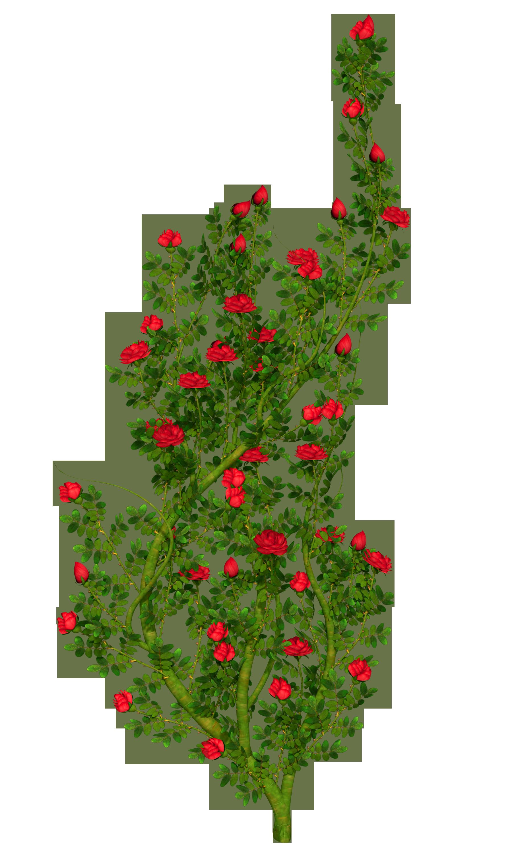 Shrub clipart rose plant Size Gallery Yopriceville High Rosebush