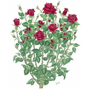 Pink Rose clipart rose bush Decor and Interiors Home Garden_Roses