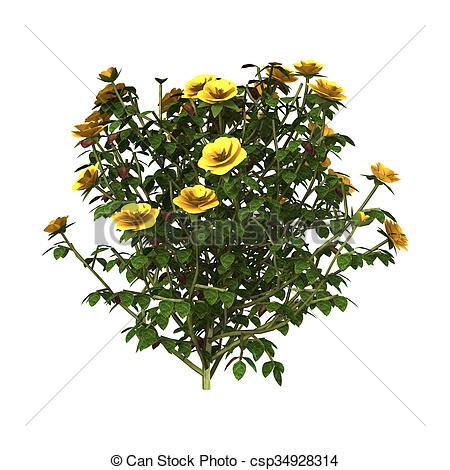 Drawn rose bush yellow rose Illustration Rose of render