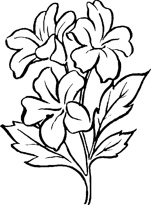 Rose clipart different kind plant #1