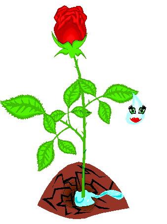 Rose clipart rose plant #4